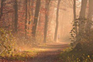 Loof rennen door het bos